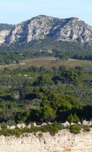 Les principales forêts méditerranéennes sont représentées par des boisements mixtes de feuillus et de résineux.