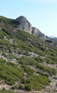 Paysage de garrigue et vue des Alpilles au départ de Mouriès